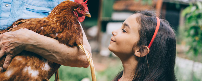 Girl looking at rooster