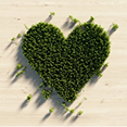 Heart shape made of our greenery